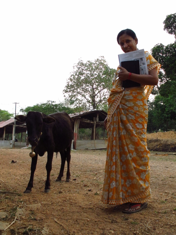 In Shimoga, India – Meeting Most of India's Indigenous Cattle Breeds