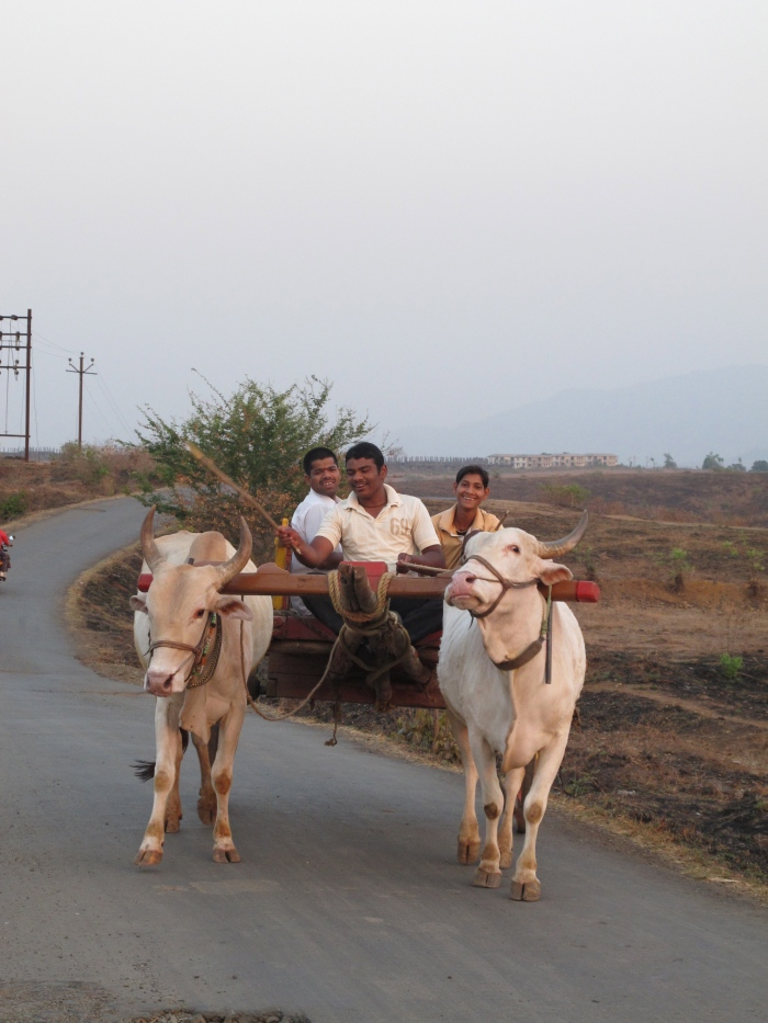 mother cow marvin harris Get an answer for 'how does marvin harris explain how the cow became sacred in indiaindia's sacred cow story' and find homework help for other social sciences questions at enotes.