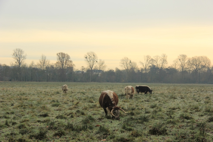 The meadow in the early morning winter sunlight gives the illusion of being in the countryside.